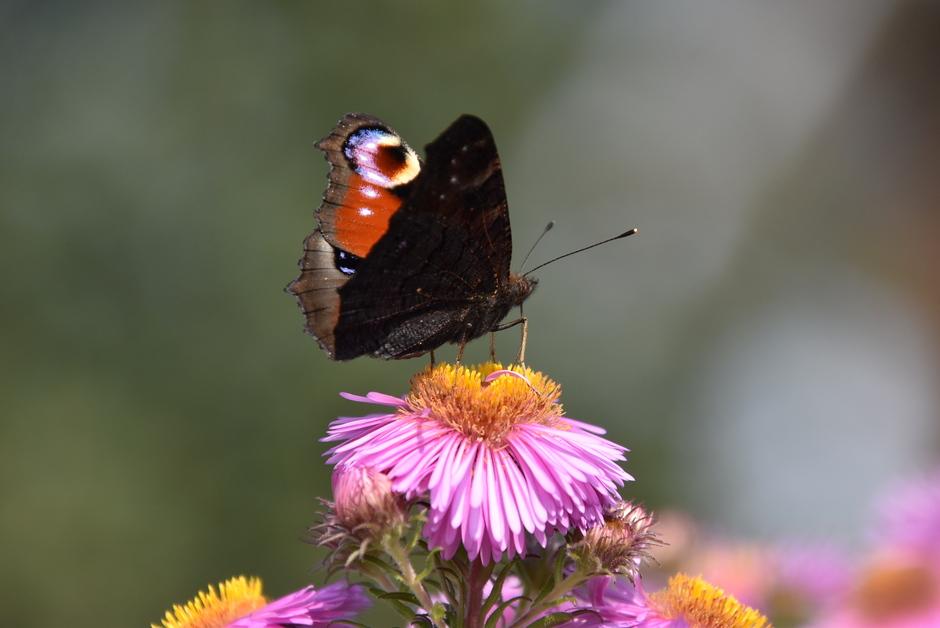 Zonnig vlinderweer