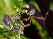 Felixstowe garden insects