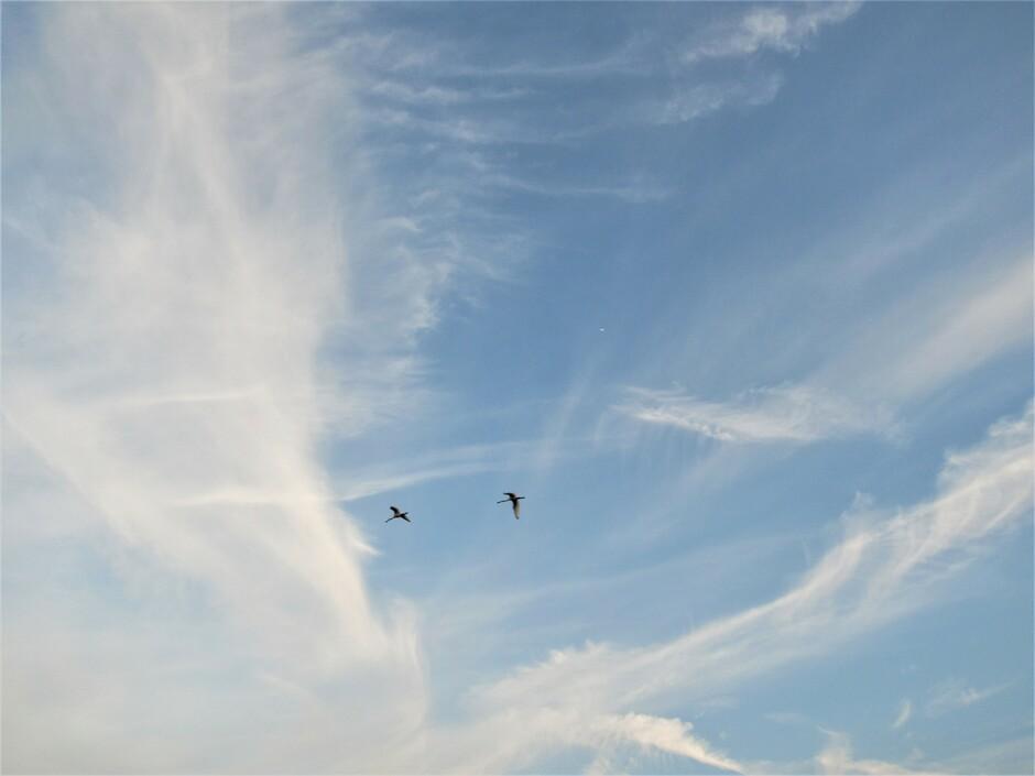 Windveren, vegen en vogels gisteravond tijdens zonsondergang