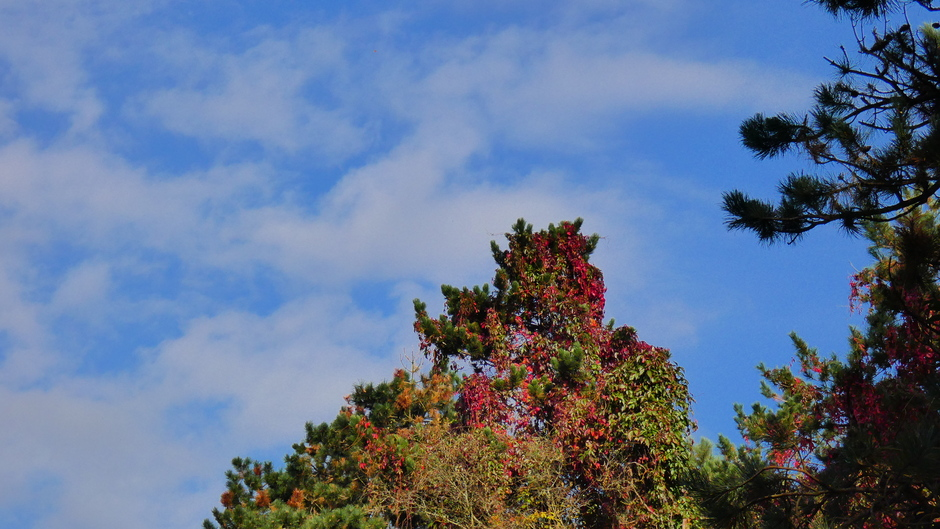 Bladeren verkleuren tegen een licht bewolkte lucht