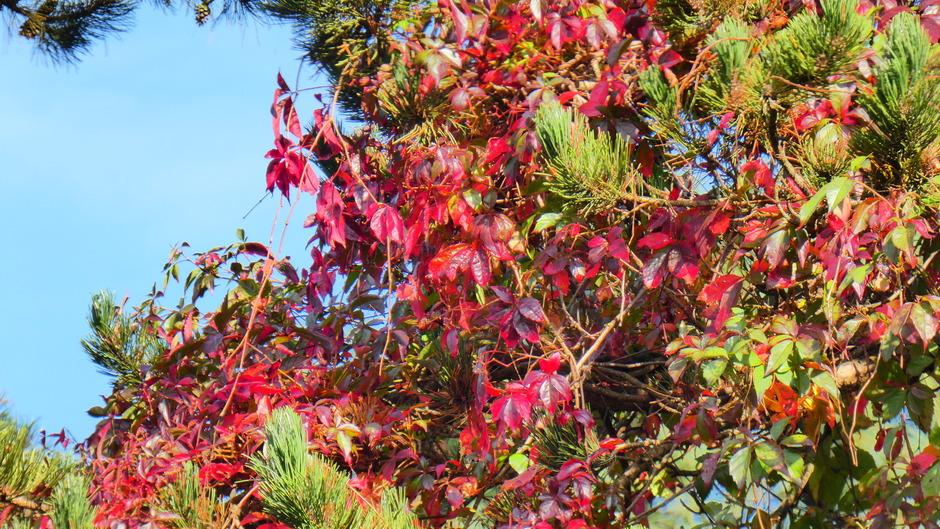 Herfstbladeren in het bos vanmorgen