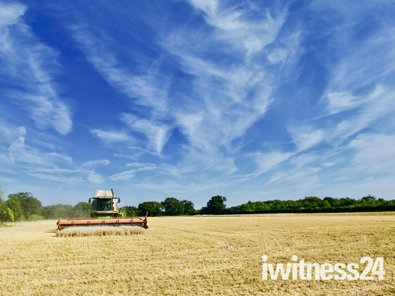 Last field of Wheat at Shelly  18/09/2021