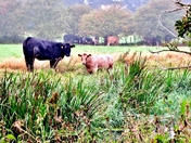 Grazing the Water Meadows