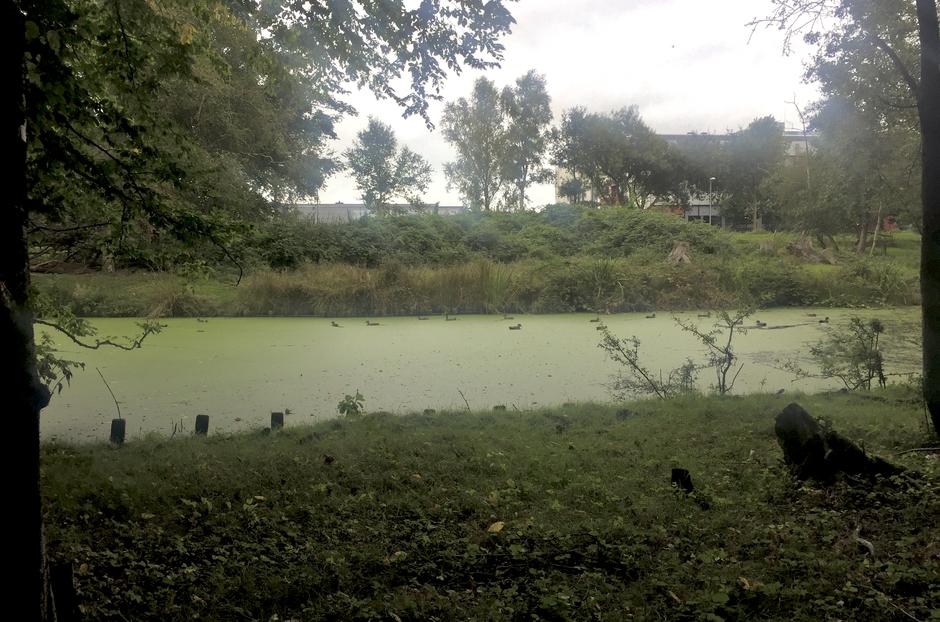 De eendjes zwommen vandaag rond