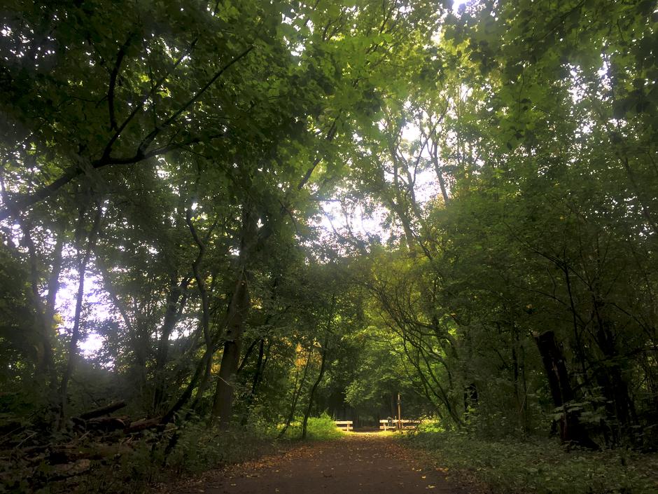 Een tafereel uit het bos