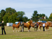 First Show for the Suffolk Horse Society since September 2019