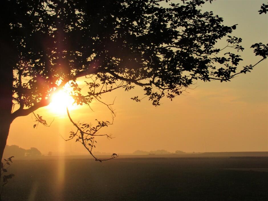 Net voor de zon onderging, het was nevelig over de landerijen bij Colijnsplaat