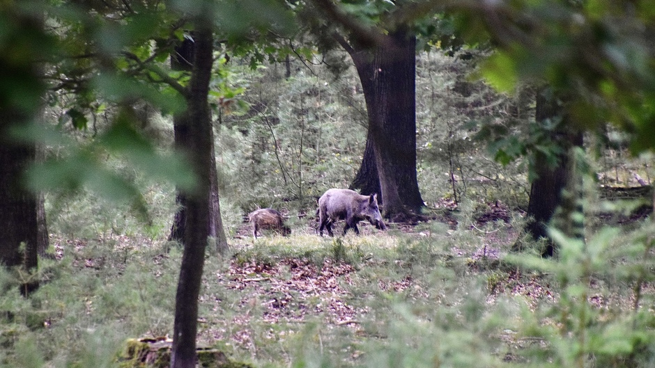 Verscholen in het bos…moeder en kind.