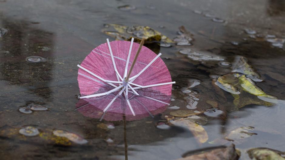 Deze week de paraplu wel bij de hand houden