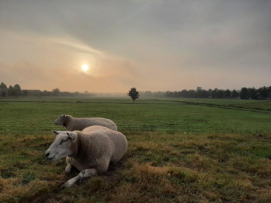 Zonsopkomst met wat mist