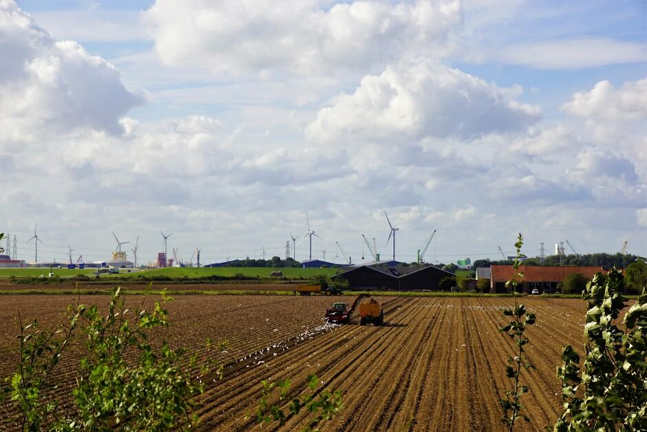 zon blauw wolkenvelden 19 gr aardappelen rooien en meeuwen