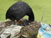 Wildlife in Valentine Park, Ilford