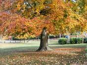 Project 52 Autumn
