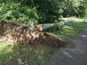 Trees blown over in the Byes