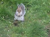 Garden Squirrels