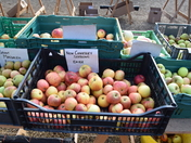 Apple Day at Stow Hall Gardens