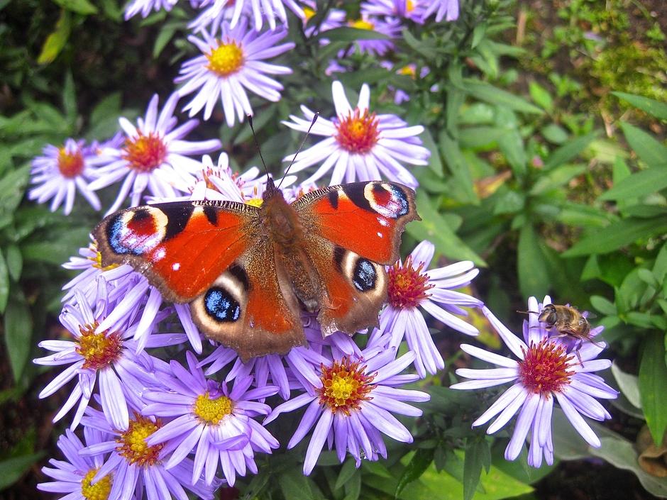 Vlinder spaart energie, zit doodstil om 15.40 u. bij 13,5 gr.