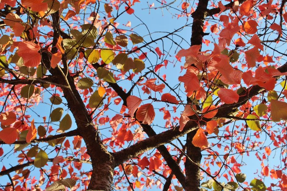 herfstkleur en blauwe lucht