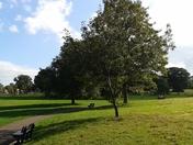 Autumn colours in Phear Park