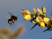 October busy bees