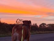 Beautiful dawn