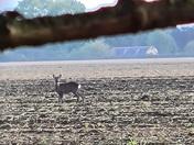 Little deer !