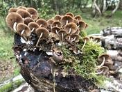 Fabulous fungi on roydon common