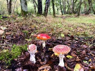 Fairytale Fungi on Roydon common